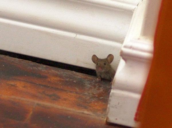 mouse_peek